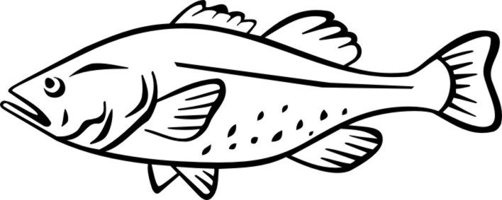 Sketch clipart fish Etc Codfish  clipart clipart