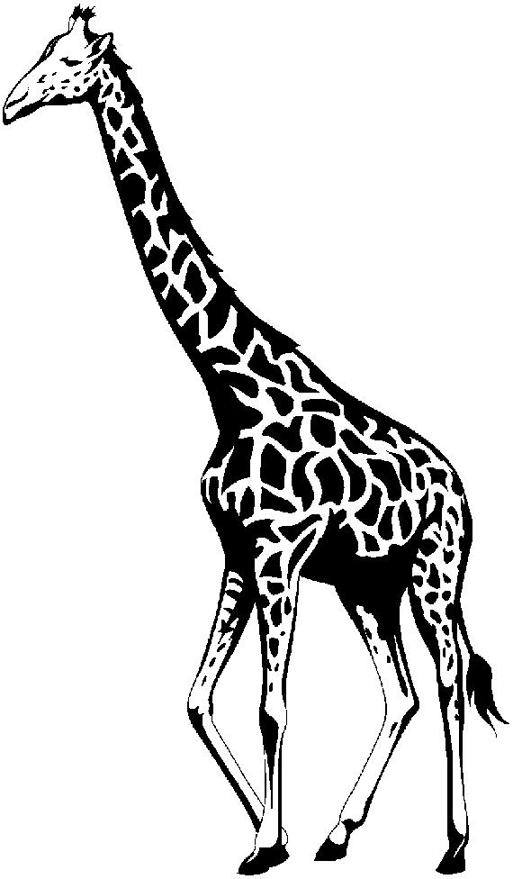 Black & White clipart giraffe Clipart library Free White on