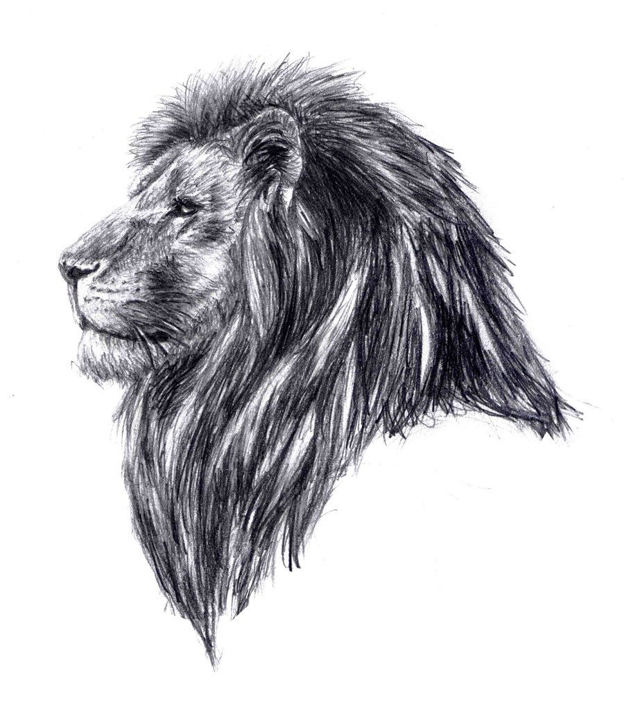 Drawn profile lion Free Art on Lion Head
