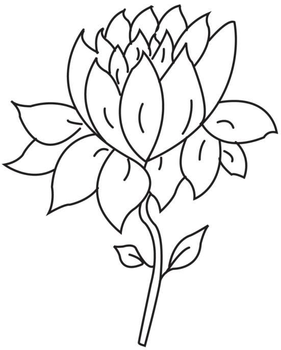 Sketch clipart lotus plant Handmade Flower lotus Greeting