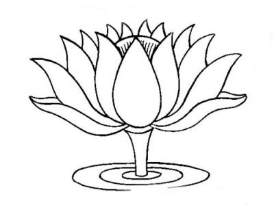 Sketch clipart lotus plant Carnival by McKay Garden Pinterest