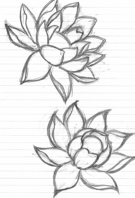 Sketch clipart lotus plant Ideas drawing Search Pinterest Google