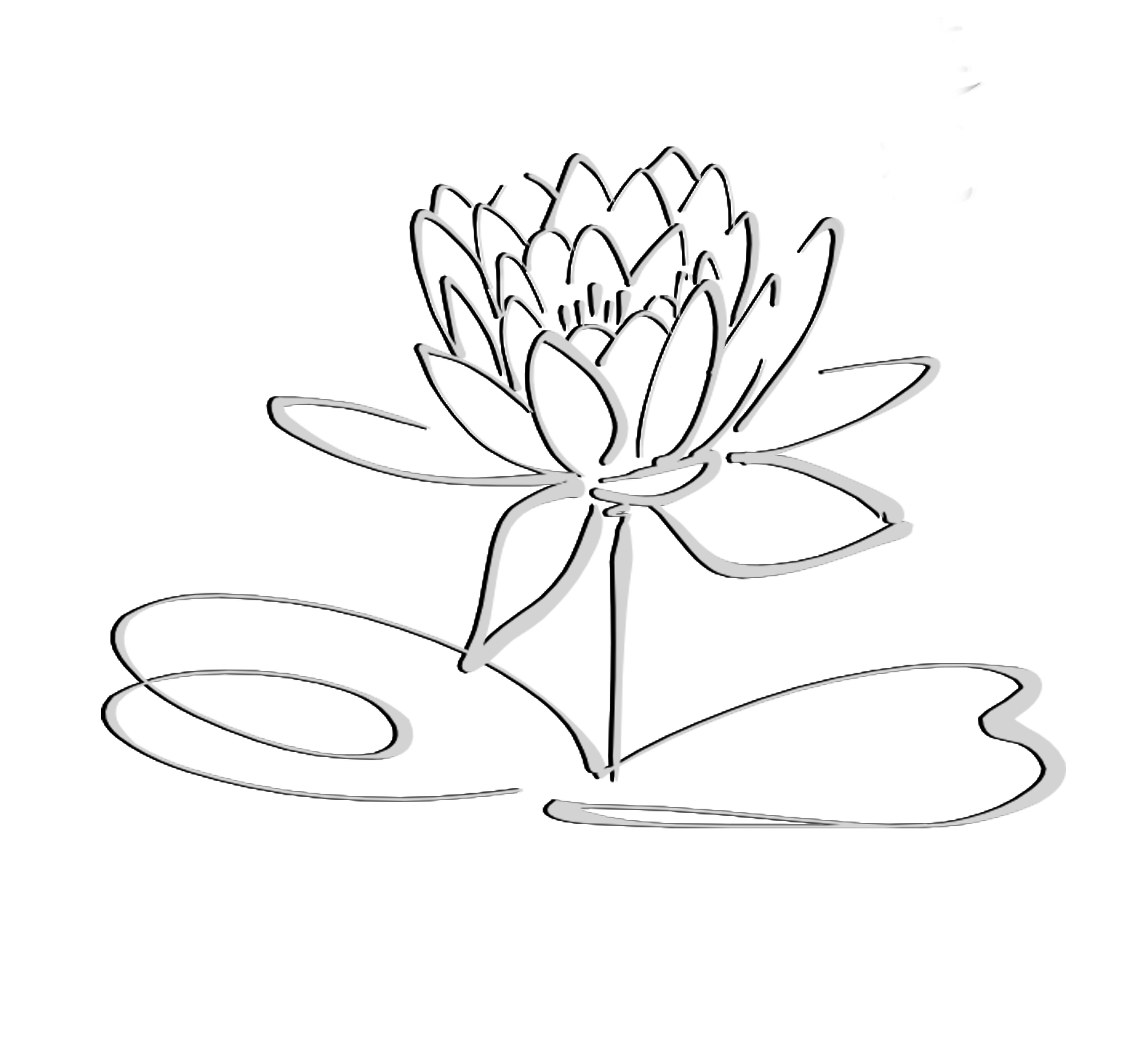 Sketch clipart lotus plant Only Logo Grayshadow Free at