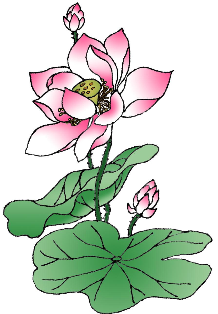 Sketch clipart lotus plant Archive lotus 397KB Clearwisdom Photo