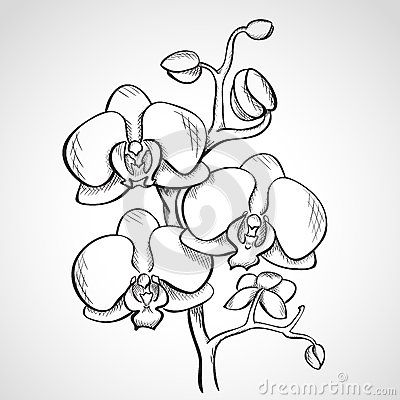 Sketch clipart orchid Images Sketch orchid branch best