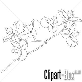 Sketch clipart orchid CLIPART  CLIPART for ORCHID