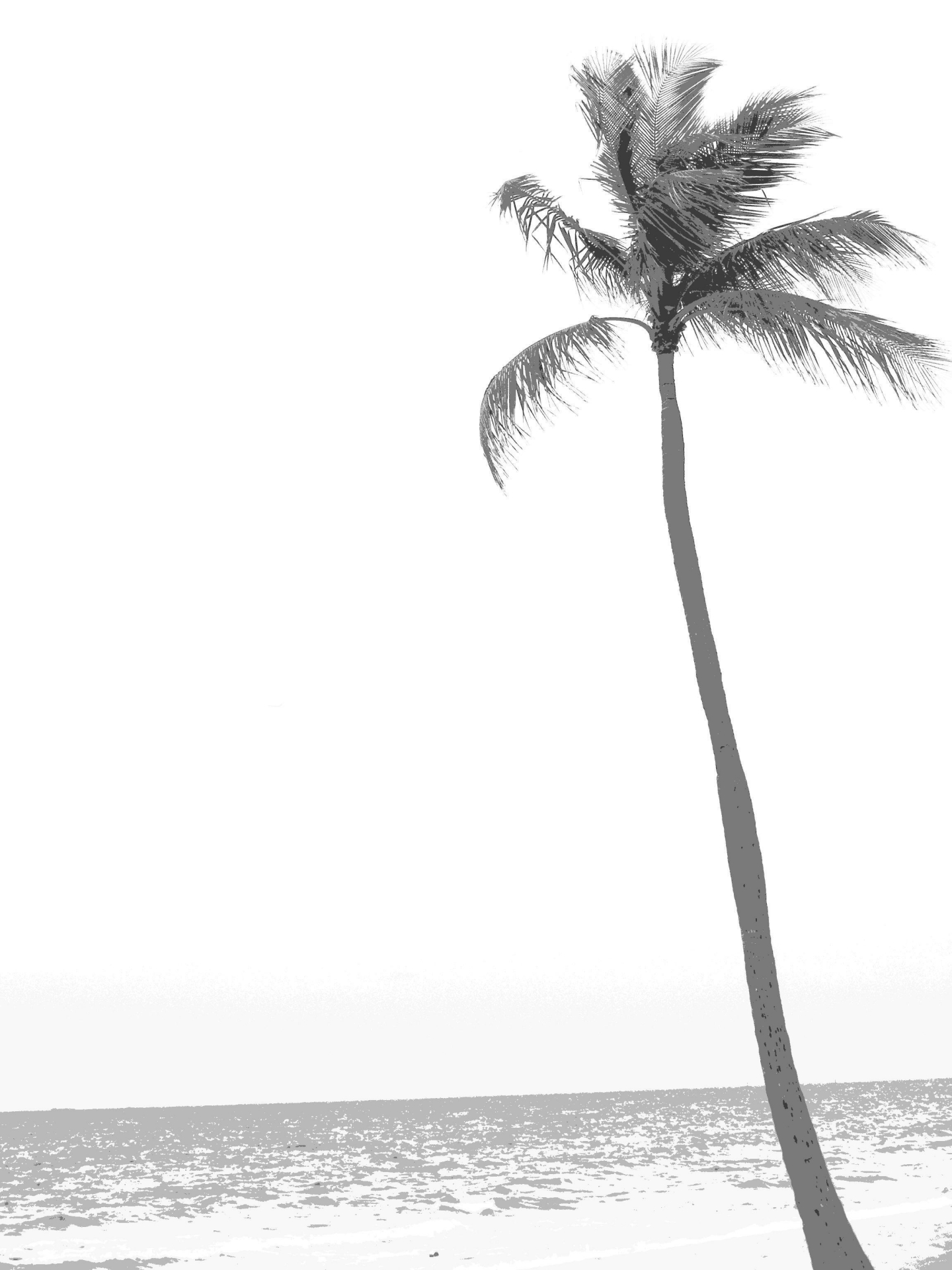 Palm Tree clipart drawn Beach Florida Images  Trees=