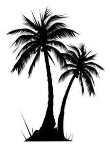 Drawn palm tree black and white #1