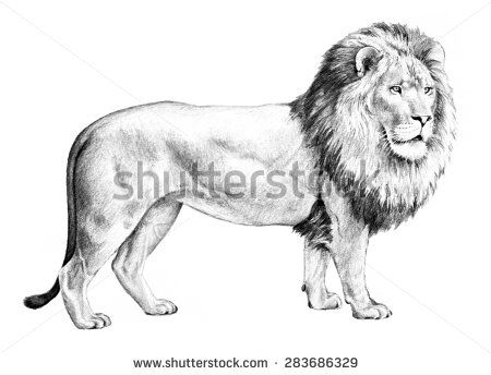 Sketch clipart pencil drawing Isolated Pinterest lion 83 shaggy