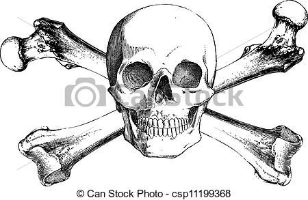 Sketch clipart skull and crossbones Of Cross three Vector Bones