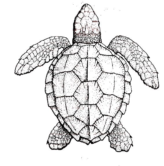 Sketch clipart tortise Students a crate sea on
