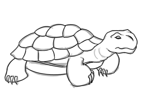 Sketch clipart tropical island Draw Pencil Tortoise on Art