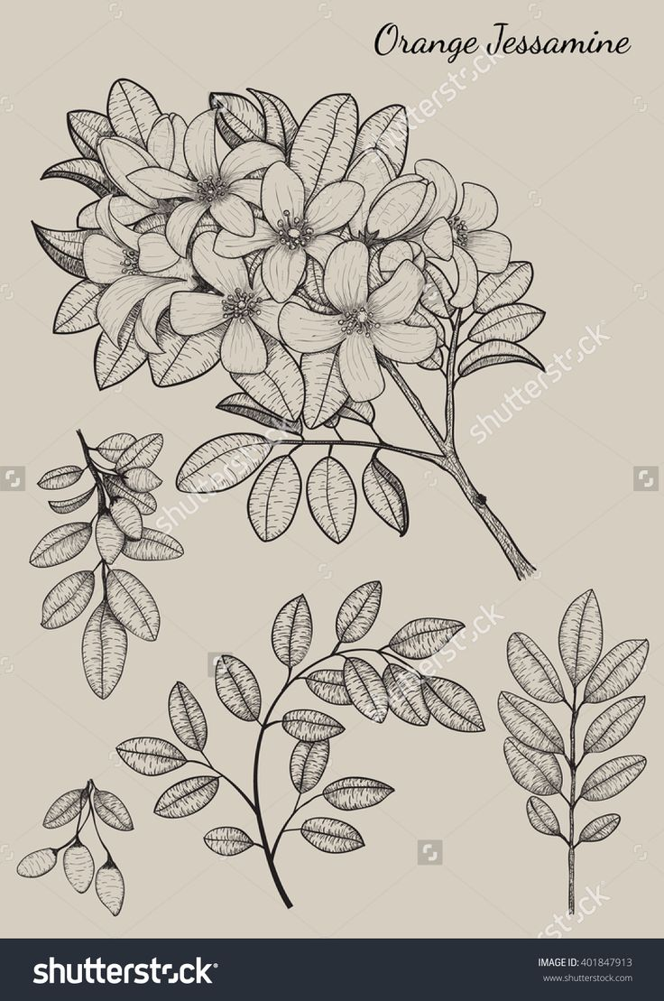 Drawn vintage flower free hand drawing 25+ Highly Elements Flower drawing