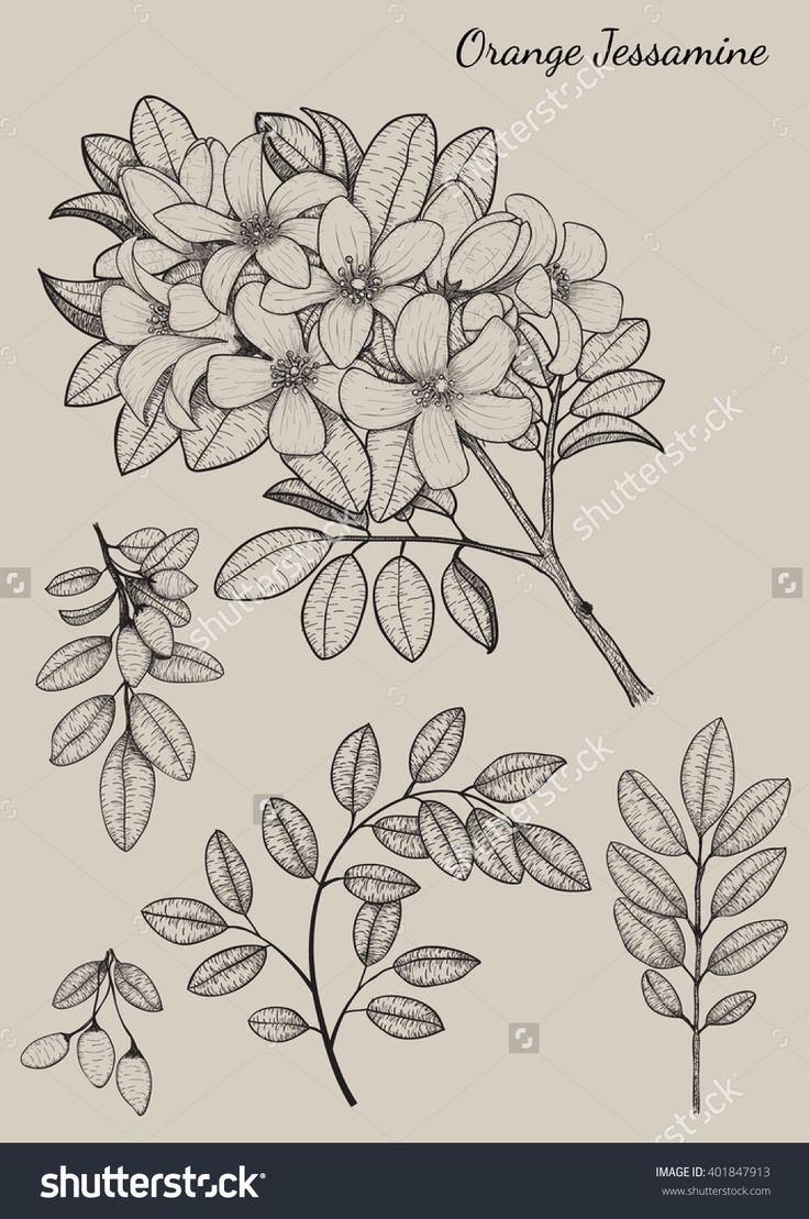 Drawn background flower designer Flower ideas Flower Design drawing