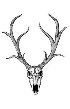 Drawn bull transparent Deer Skull Patterned Deer Art
