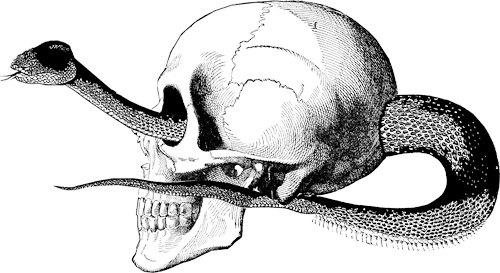 Anatomy clipart animal skull Art human clip skull human