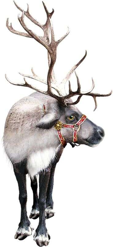 Sleigh clipart deer Christmas best sleigh Christmas about