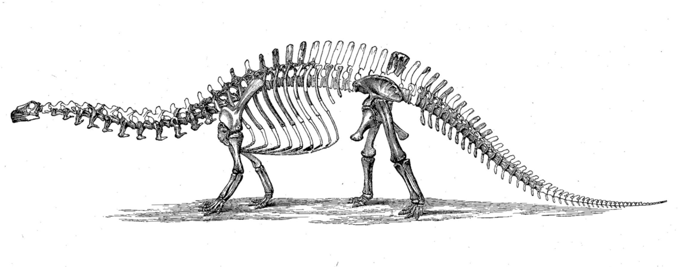 Sleleton clipart brachiosaurus EXTINCT systematics Marsh's Brontosaurus MONSTERS