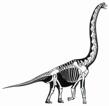 Brachiosaurus clipart blue dinosaur Clipart Panda dinosaur%20skeleton%20clip%20art Free Images