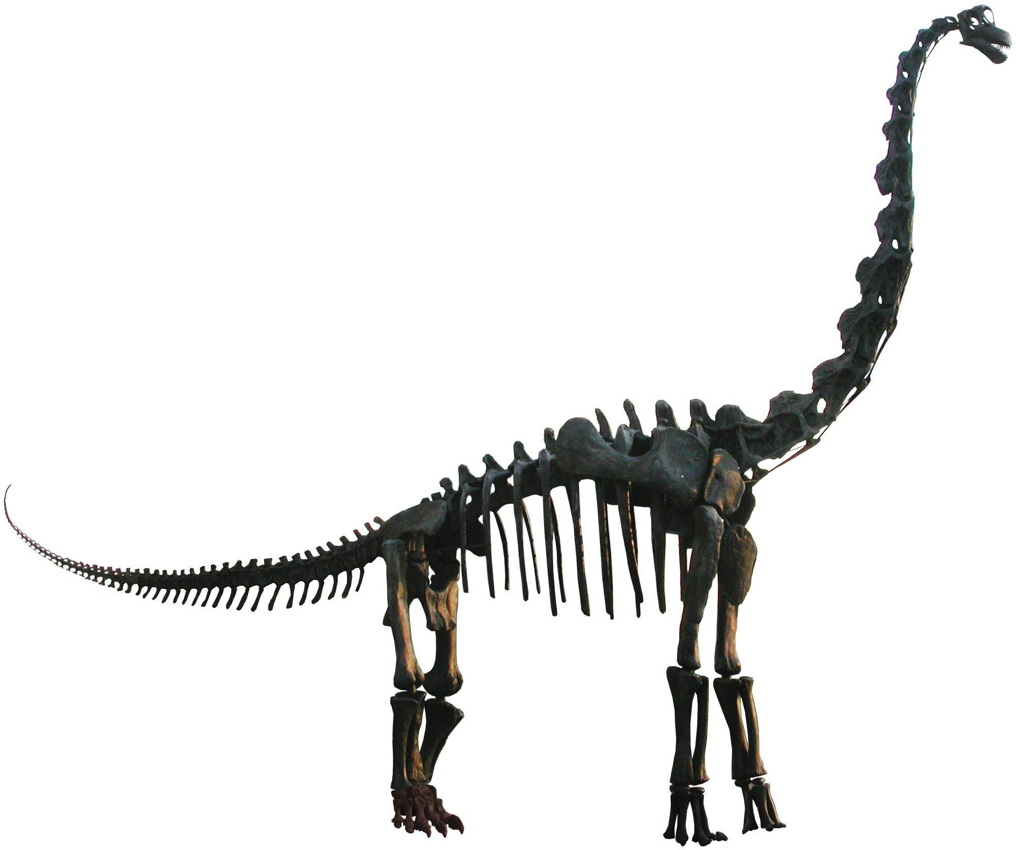 Sleleton clipart brachiosaurus Clipart Clipart Fossils dinosaur%20fossils Dinosaur
