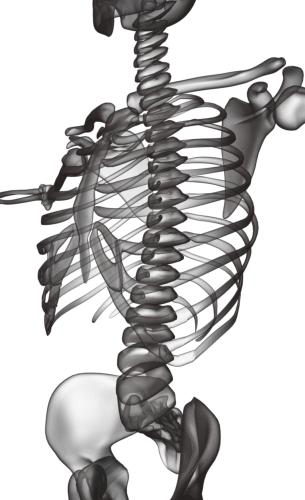 Sleleton clipart chiropractic For conventional Unlike focuses you
