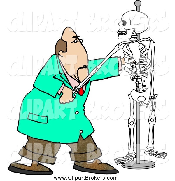 Sleleton clipart chiropractic Caucasian Skeleton a of Art