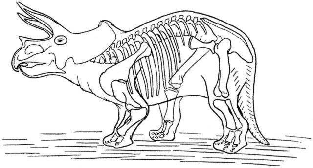 Sleleton clipart coloring page Skeleton Skeleton Dinosaur Pictures of