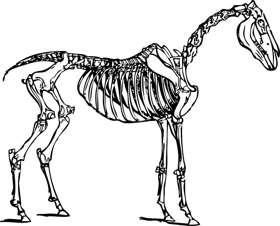 Sleleton clipart coloring page Panda Skeleton Clipart Free Images
