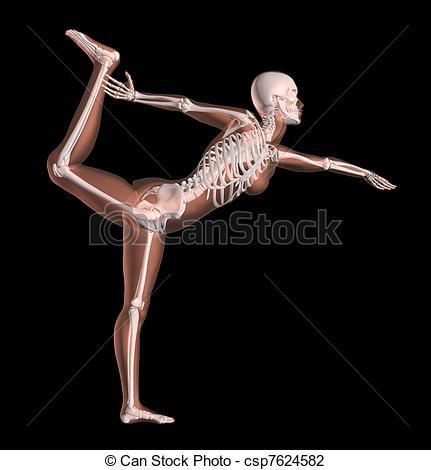 Sleleton clipart different position Skeleton  Female of 3D