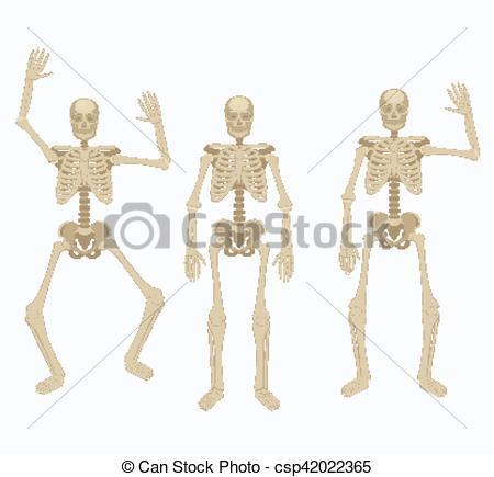 Sleleton clipart different position Skeleton Vector  skeleton Human