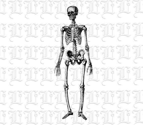 Sleleton clipart different position Skeleton Human on Instant Illustrations