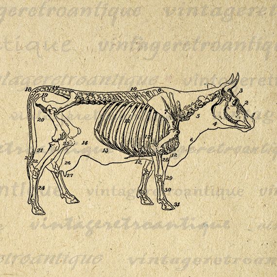 Skeleton clipart donkey HQ Image Pinterest Cow Download