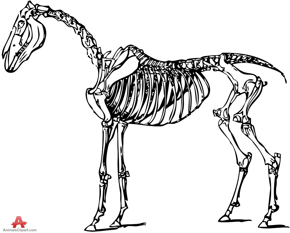Skeleton clipart donkey Horse Skeleton Design Skeleton Clipart