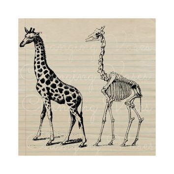 Sleleton clipart giraffe Wanelo on Vintage Art Graphic