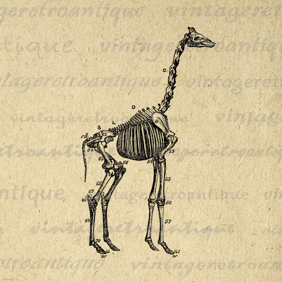 Sleleton clipart giraffe Image Skeleton Graphic Print Art