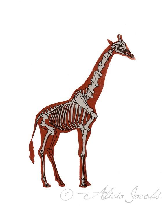 Sleleton clipart giraffe Giraffe Diagram  Screenprint Skeleton