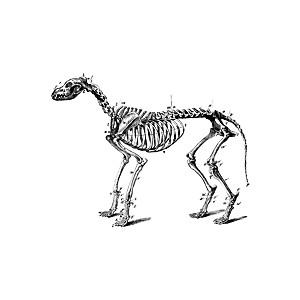 Sleleton clipart giraffe Skeleton Cliparts Dog Dog Cliparts