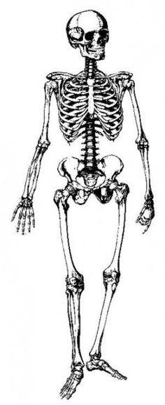 Bones clipart skelton The skin goes FITNESS Pinterest