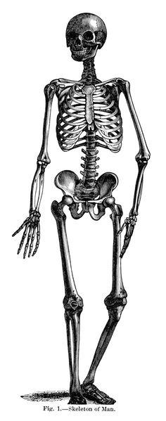 Sleleton clipart leg Skeletal skeleton image clip Skeletal