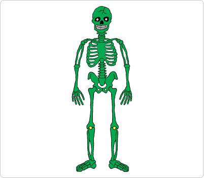 Bones clipart human body Art  Skeleton Clip