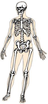 Sleleton clipart our Of Amazing A skeleton! the