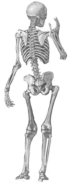 Sleleton clipart pencil work To Skeletons would pencil drawing!