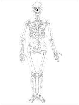 Sleleton clipart public domain Skeleton clip public images 3