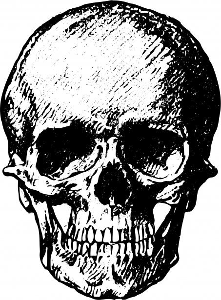 Sleleton clipart public domain Human Pictures Public Skull Photo