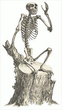 Sleleton clipart public domain Skeleton Graphics Free  Free