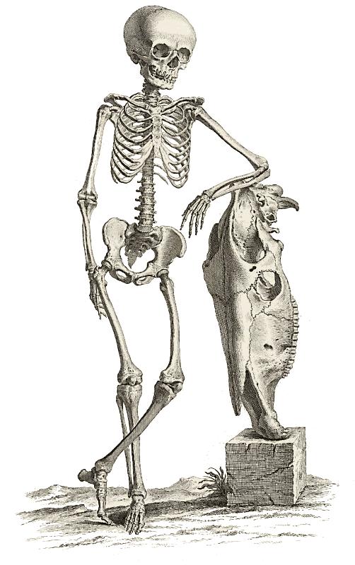 Sleleton clipart public domain Skeleton Halloween Public images Clipart