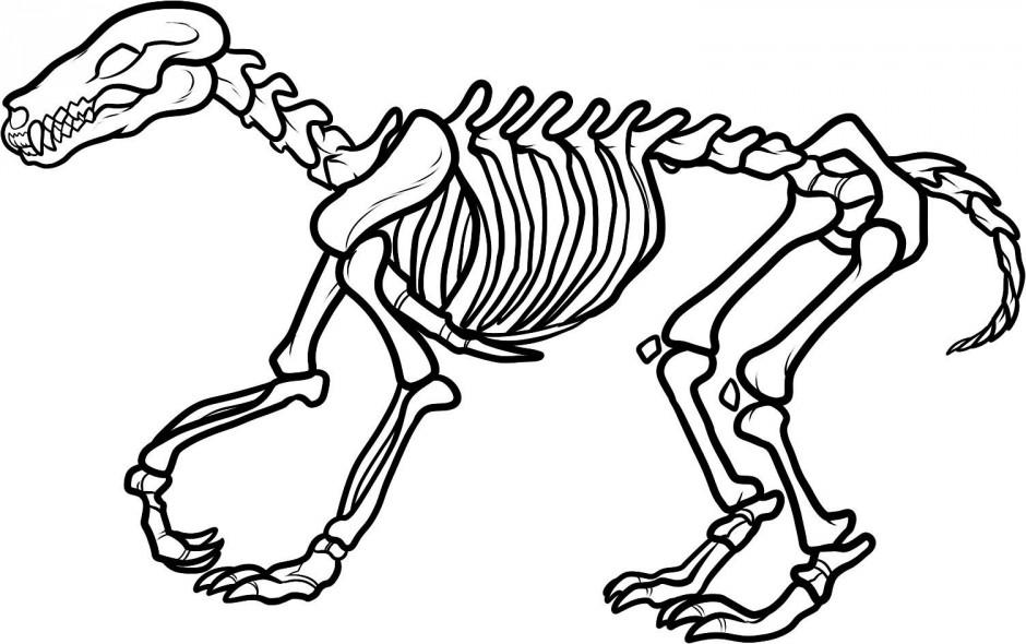 Bones clipart stegosaurus Free Art  Free Skeleton