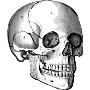 Sleleton clipart skinny Halloween:day skulls/skeletons/bones Skull days Clipart