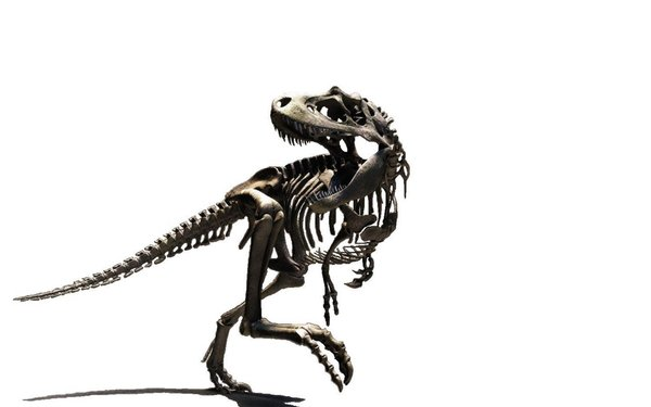 Bones clipart t rex Clipart Skeleton Bay Skeleton Rex