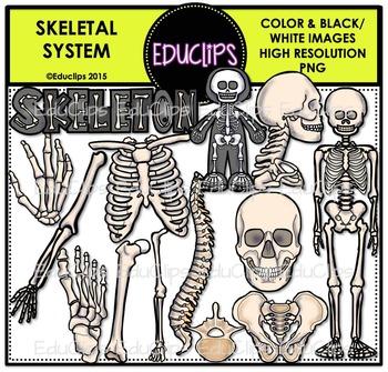 Sleleton clipart word Clip {Educlips Skeletal Skeletal Bundle